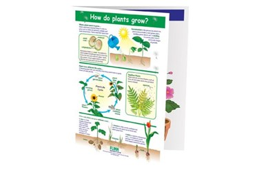 How Do Plants Grow? NewPath Visual Learning Guide