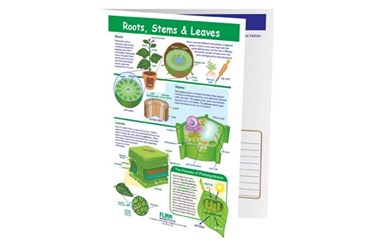 Roots, Stems & Leaves—NewPath Visual Learning Guide