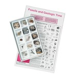 Introductory Classroom Fossil Collection for Geology