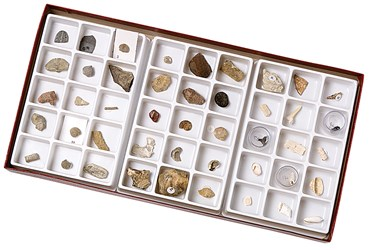 Stratigraphic Fossil Collection for Geology
