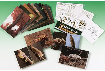 Ecology Flashcards for Aquatic Macroinvertebrate Life Cycles and Habitats