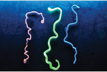 Fluorescent Gummy Worms Polymer Chemistry Demonstration Kit