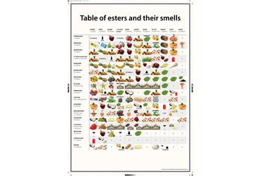 Esters and Their Smells Poster