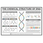 Compound Interest™ The Chemical Structure of DNA Poster