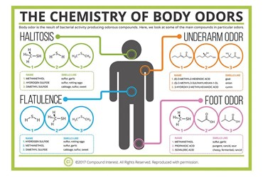 Compound Interest™ The Chemistry of Body Odors Poster