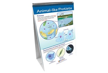 Protists: Pond Microlife—NewPath Science Flip Chart Set