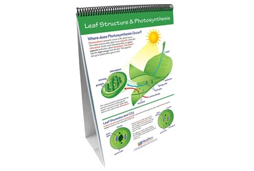 Photosynthesis & Cellular Respiration—NewPath Science Flip Chart Set