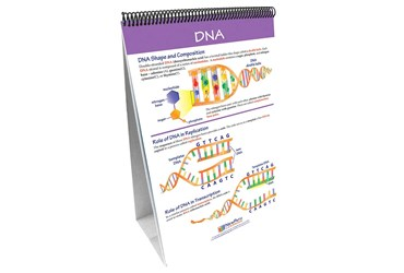 Chromosomes, Genes & DNA—NewPath Science Flip Chart Set