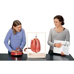 Healthy vs. Smoker's Lung Demonstration Kit