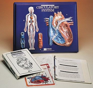 Heart Model Activity Set