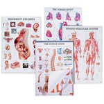 Anatomical Charts for the Biology and Life Science Classroom