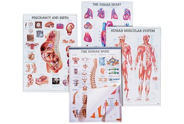 Respiratory System Chart for Anatomy Studies