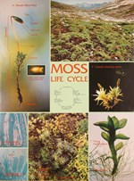 Moss Life Cycle Chart for Biology and Life Science