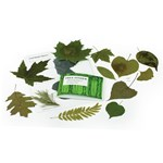 Leaf Identification Activity Kit for Biology and Life Science