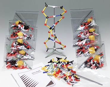 DNA Model Kit for Biology and Life Science