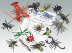 Arthropod Classification Activity Kit for Biology and Life Science
