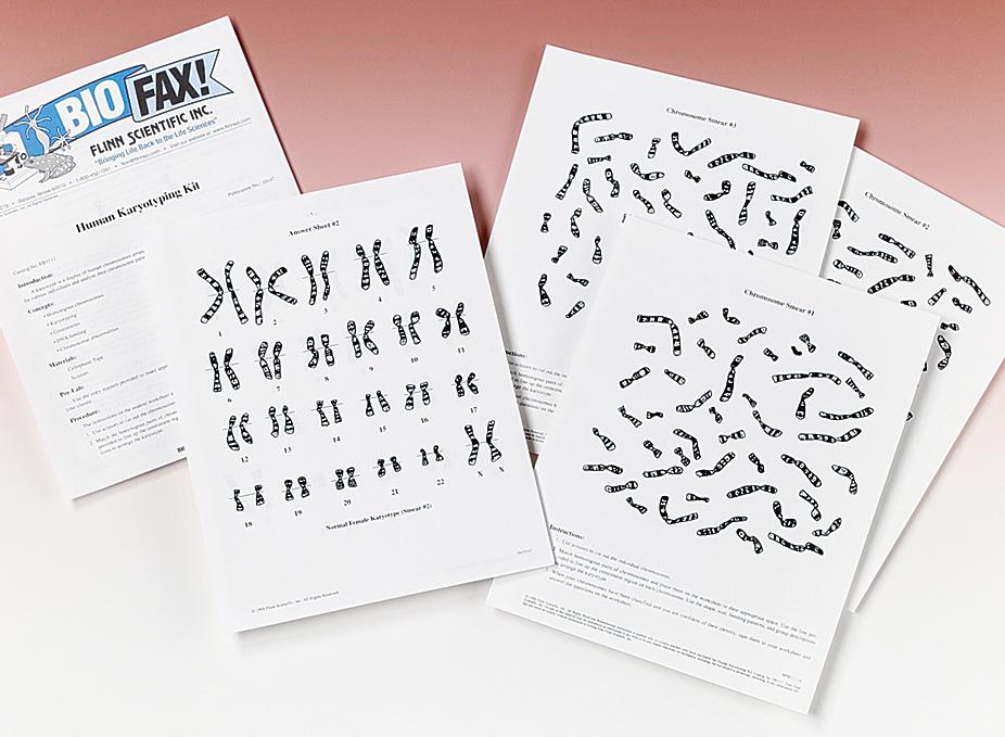 Human Karyotyping Super Value Kit – Karyotypes Worksheet