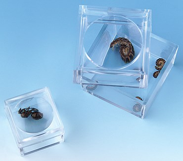 Magnifying Bug Box, Small