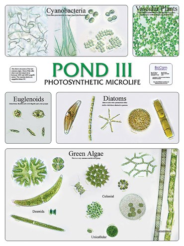Pond III and Photosynthetic Microlife Chart for Biology and Life Science