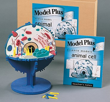 Animal Cell Model Kit for Biology and Life Science