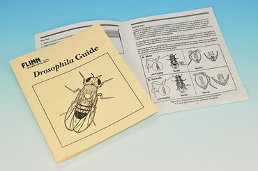 Flinn Drosophila Guide Book and Lab Manual