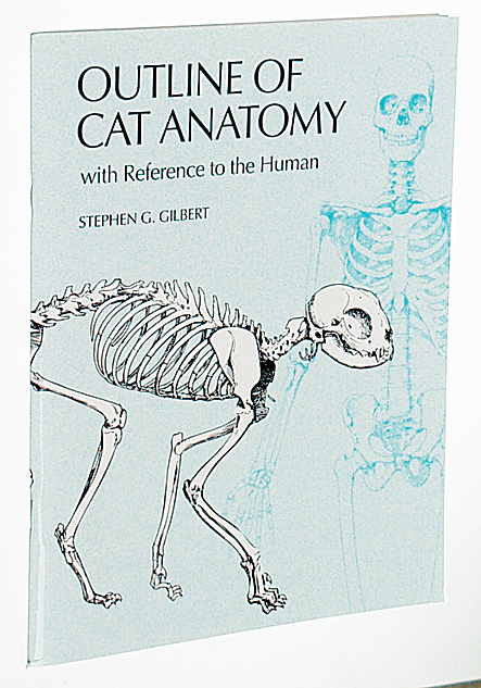 Outline Of Cat Anatomy