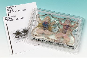 Pro-Sect® Dissected Bullfrog Mount for Biology Lab