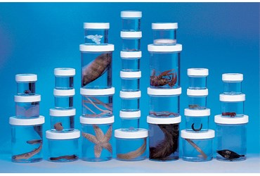 Preserved Animal Survey Set A for Biology and Life Science