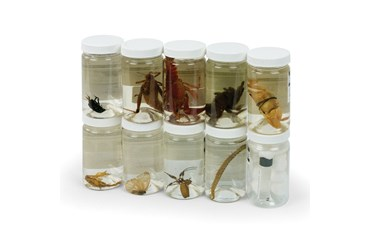 Preserved Arthropod Survey Set for Biology and Life Science