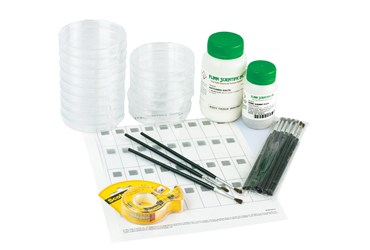 Stuck-on Artemia Animal Behavior Laboratory Kit for Biology and Life Science