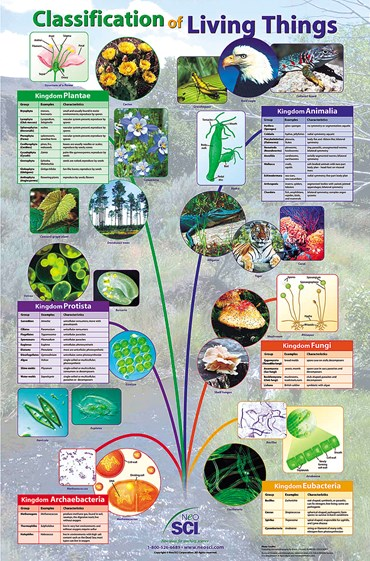 Classification of Living Things Poster for Biology and Life Science