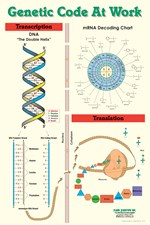 Genetic Code Poster for Biology and Life Science