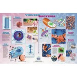Viruses and Bacteria Poster for Biology and Life Science