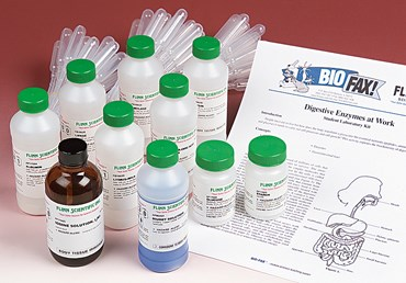 Digestive Enzymes at Work Biochemistry and Physiology Laboratory Kit
