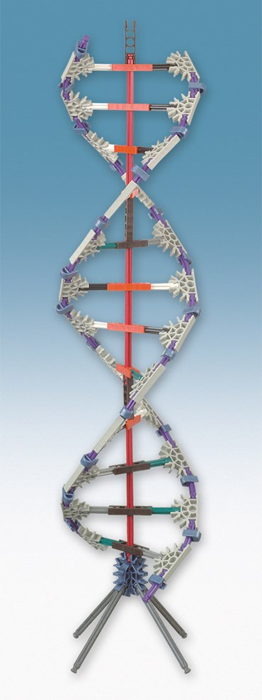 DNA Replication and Transcription Set for Biology and Life Science