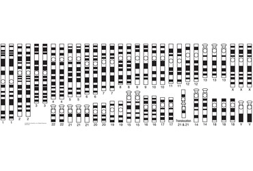 Magnetic Karyotypes Genetics Demonstration Kit for Biology and Life Science