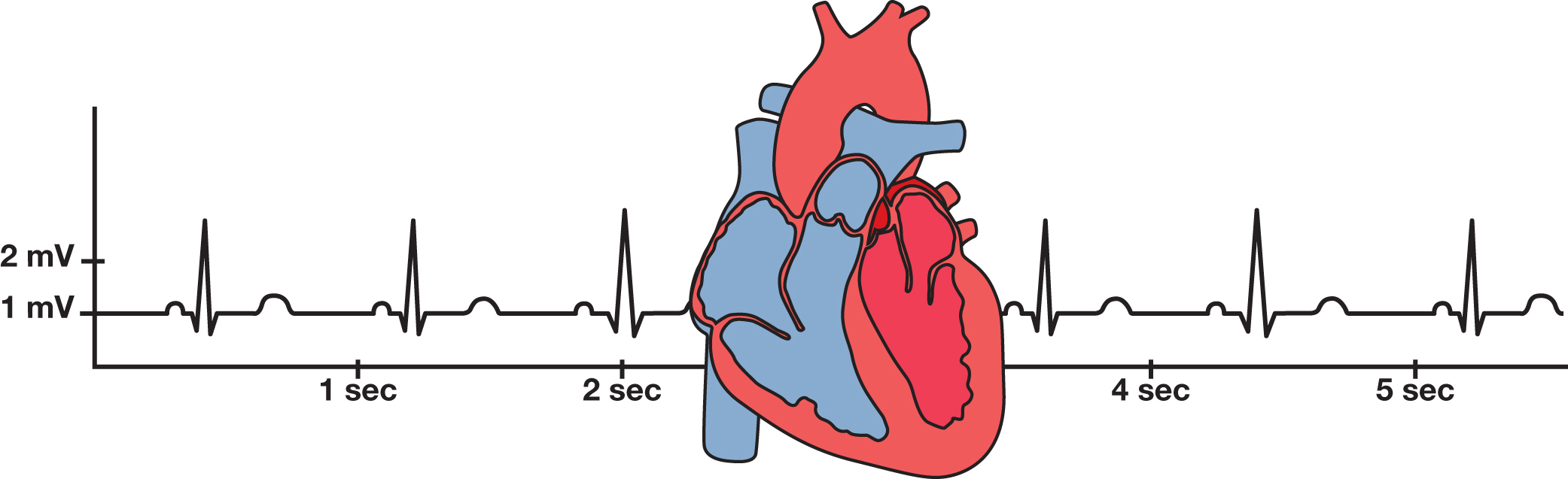 Studying Heart Function Using Electrocardiograms - Super Value Kit