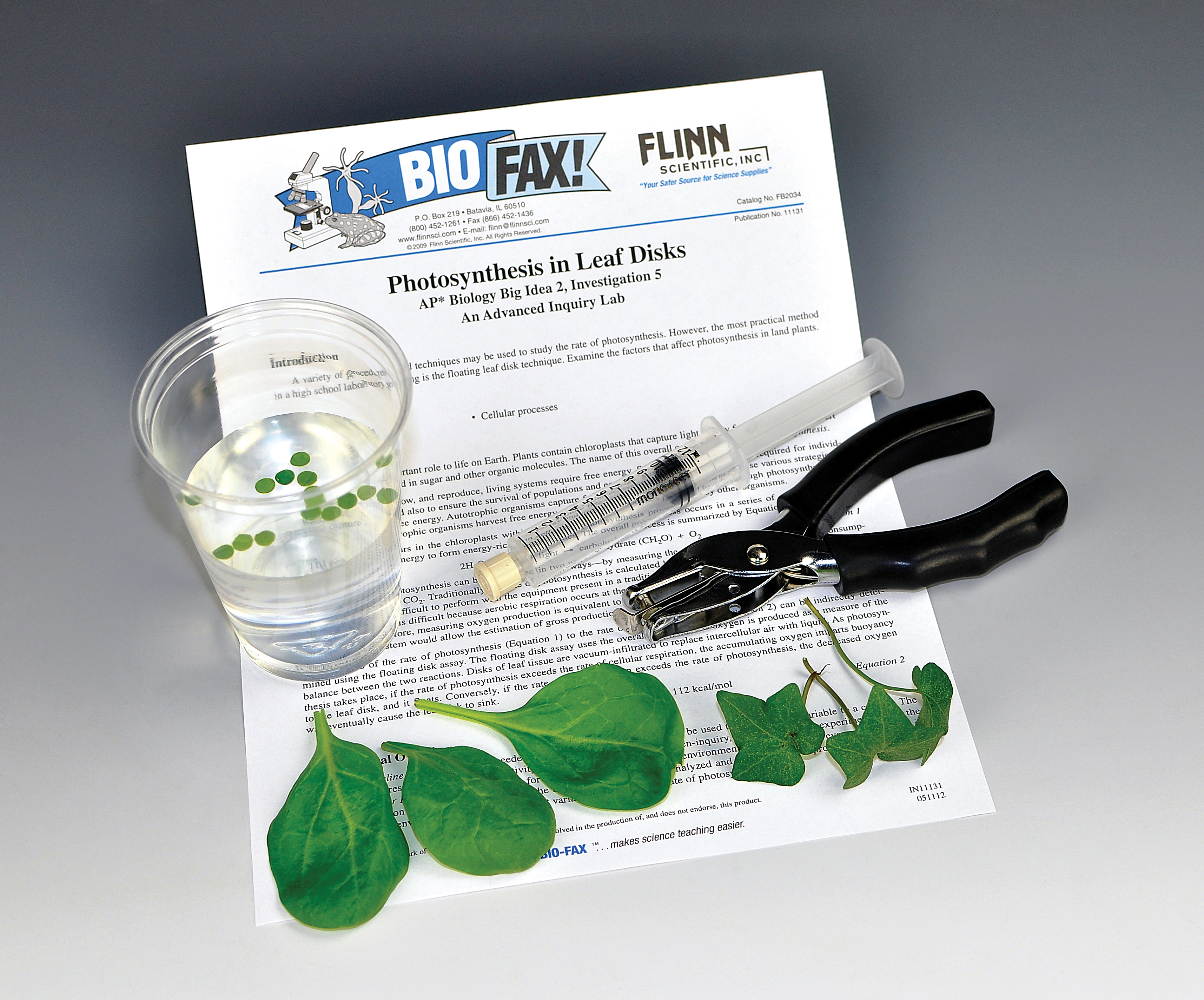 biology leaf lab Lab report 1 biology photosynthesis - download as word doc (doc / docx), pdf file (pdf), text file (txt) or read online biology lab report on photosynthesis.