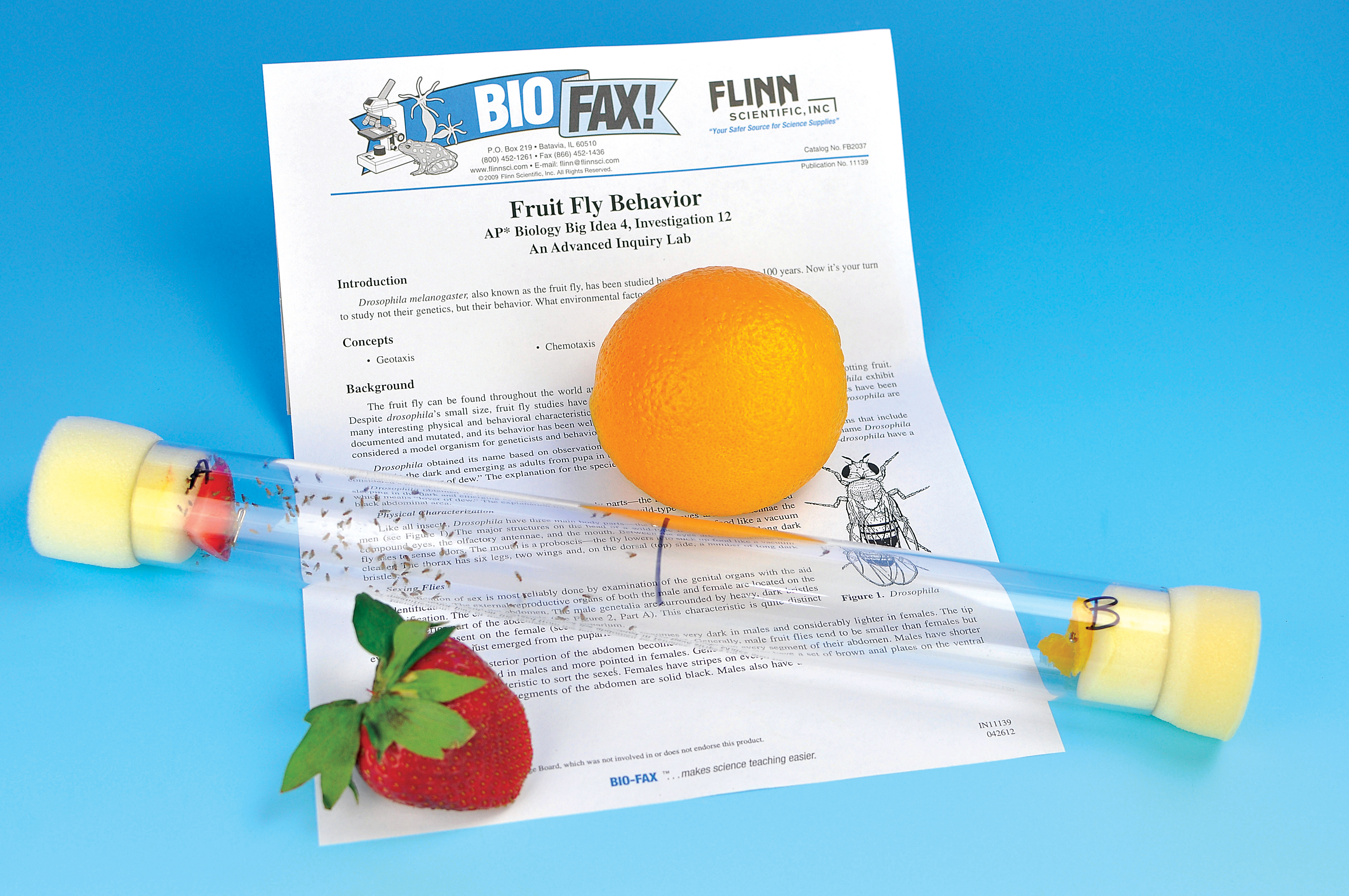 ap biology fruit flies essay Answers must be in essay form in fruit flies 2003 ap biology free-response questions ap biology.