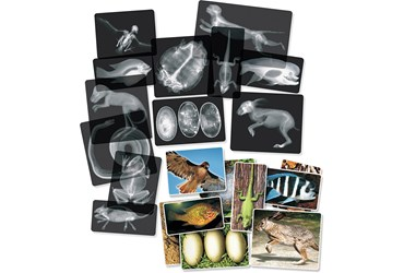Animal X-Rays for Biology and Life Science