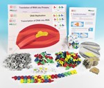 Flow of Genetic Information Activity Kit for Biology and Life Science