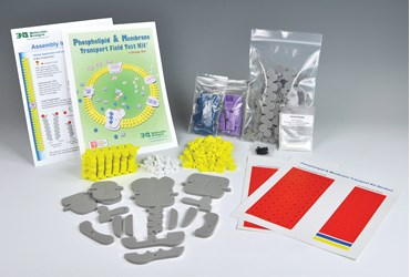 Phospholipid and Membrane Transport Kit for Biology and Life Science