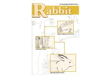 Rabbit Dissection Guide for Biology and Life Science