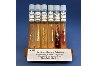 High School Bacteria Collection
