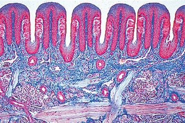 Tongue Microscope Slide