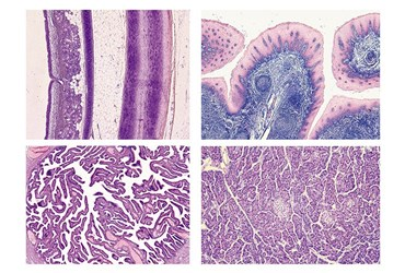 Normal Human Histology Slide Sets