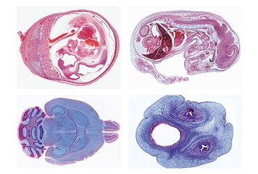 Histology of Domestic Animals Slide Sets