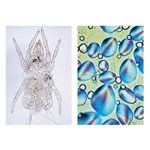 Food Science Multimedia Microscope Slide Instructor Package for Biology and Life Science