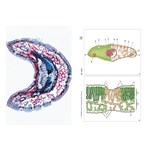 Environmental Damages Multimedia Microscope Slide Instructor Package for Biology and Life Science