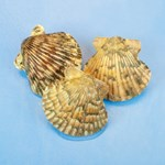 Preserved Scallops, Pkg. of 10